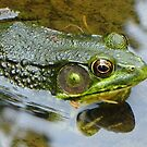 Pond Frog  by clizzio