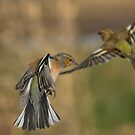 Chaffinches in flight by M S Photography/Art
