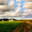 Dirt Road to Old Homestead by kenmo