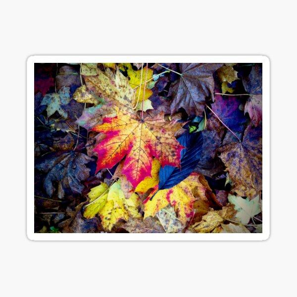 Autumnal Leaf Fall Sticker