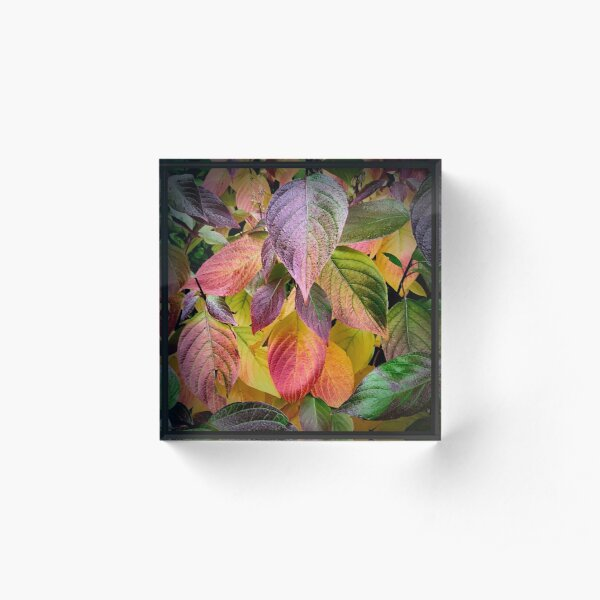 Colourful Autumn Leaves Acrylic Block