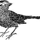Sparrow by Arsonista Gartzia