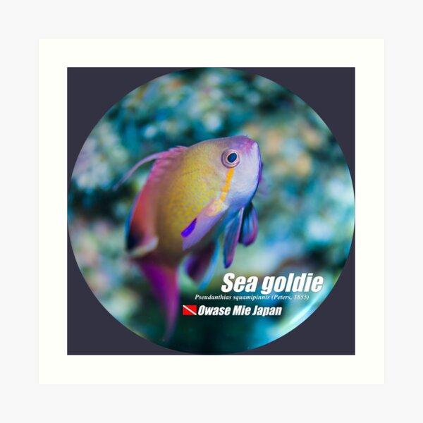 Cute Sea goldie print Art Print