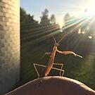 Mantis at MBO by Mount Burnett Observatory