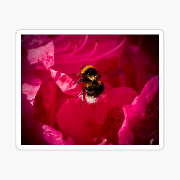 Busy Bee Sticker