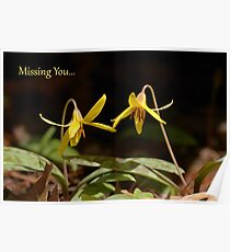 Missing You...Dogtooth Violet Notecard Poster