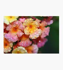 lantana in the rain by bs hilton Photographic Print