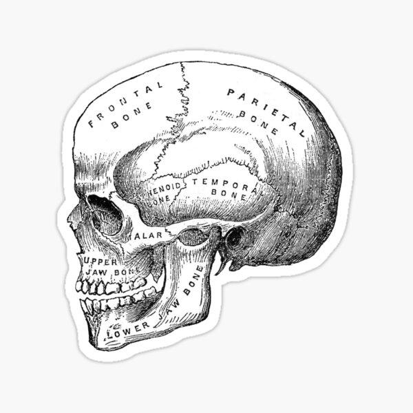 Skull 2.0 Sticker