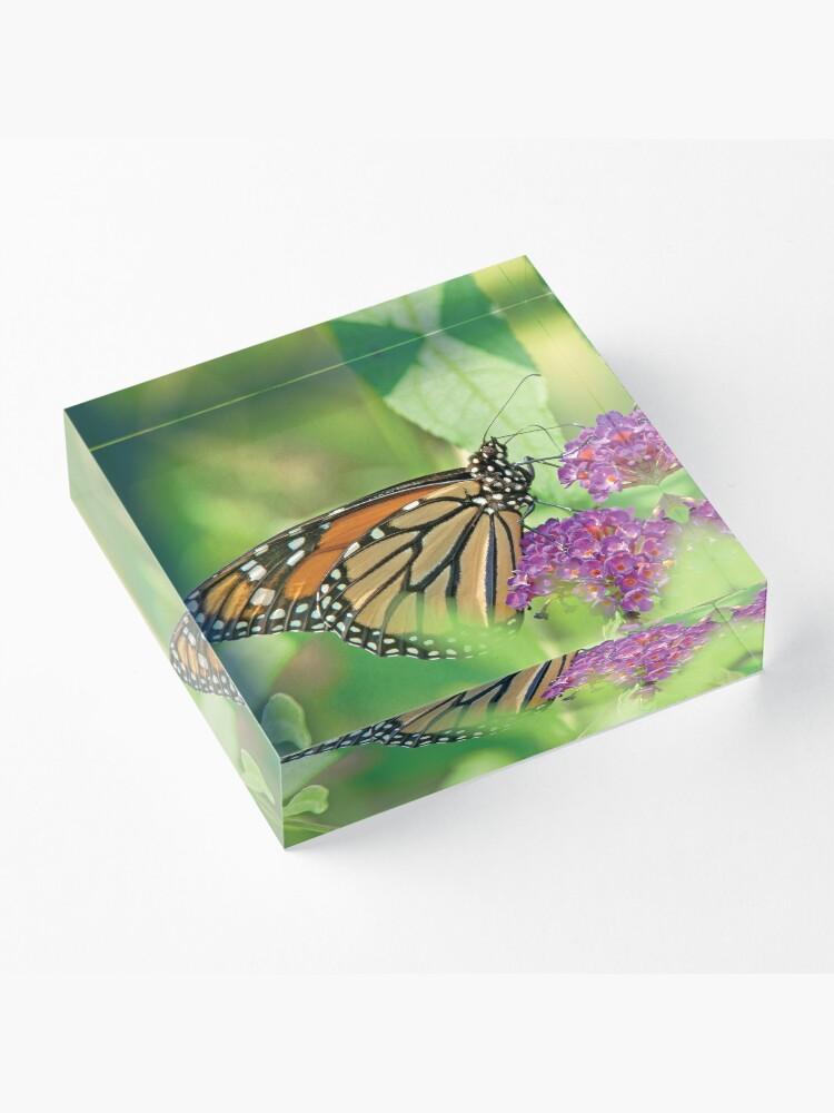 Alternate view of Monarch Butterfly on Butterfly Bush Acrylic Block