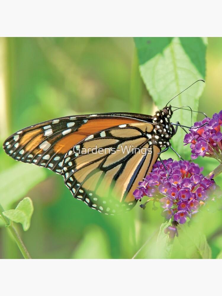 Monarch Butterfly on Butterfly Bush by Gardens-Wings