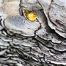 Dragon Teardrop  by WobblyWombat