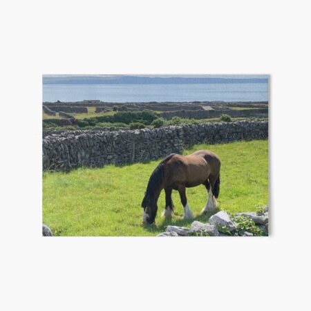 Horse Inis Oirr, Ireland Art Board Print