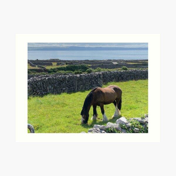 Horse Inis Oirr, Ireland Art Print