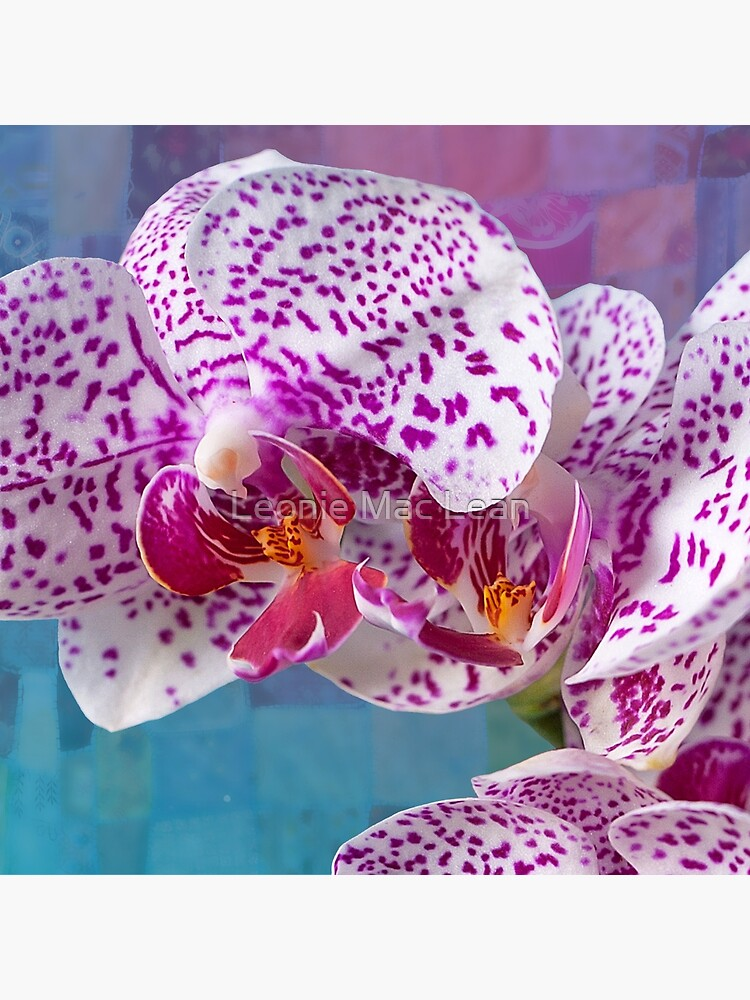 Phalaenopsis orchid with patchwork by yallmia