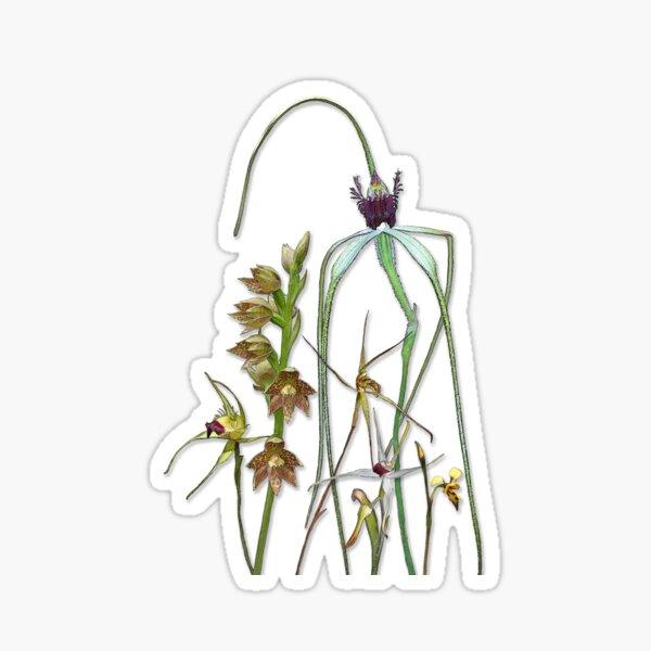 Orchids of Australia 1 Sticker