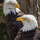 Two Eagles by Jerry Walter