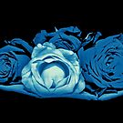 Cyanotype roses by Avril Harris