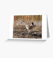 Roadrunner on the Hunt Greeting Card