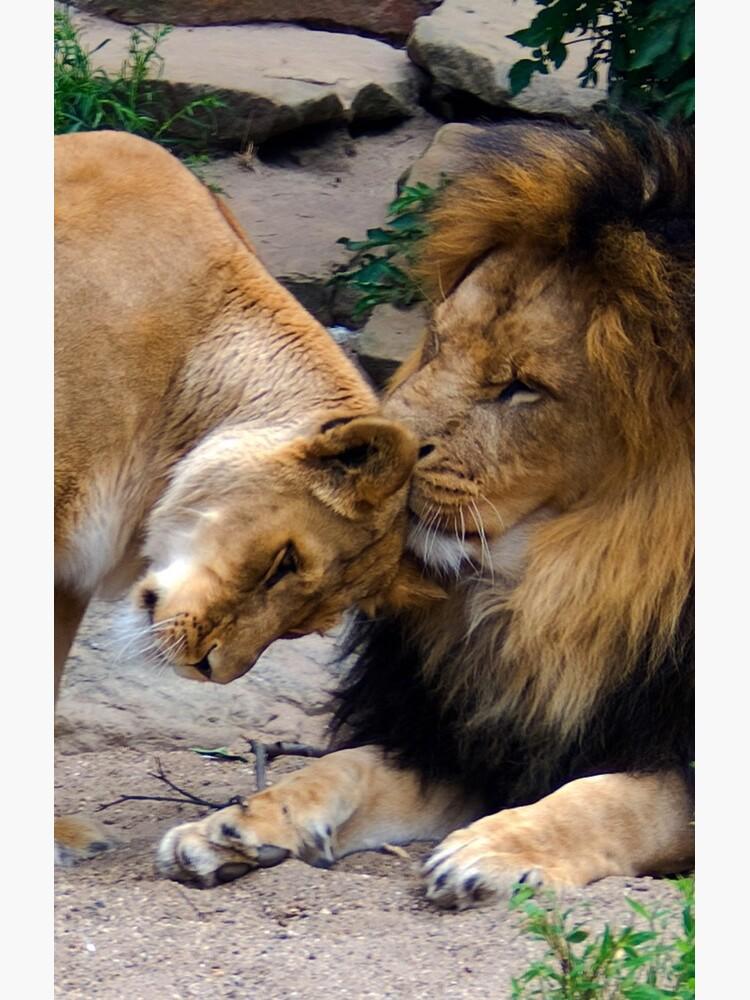 True love by steppeland