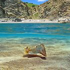 Mediterranean cove with cuttlefish underwater by Dam - www.seaphotoart.com
