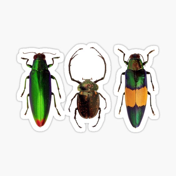 Bug Beetle Insects Species Coleoptera Beetles Animals Colorful  Sticker