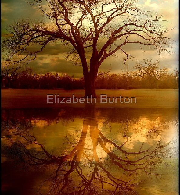 "A Place To ""Reflect"" by Elizabeth Burton"