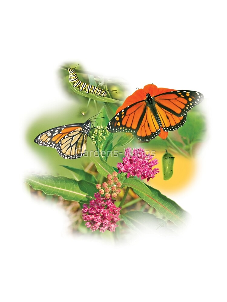 Monarch Life Cycle by Gardens-Wings