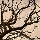 Twisted Tree. by Annabelle Ward