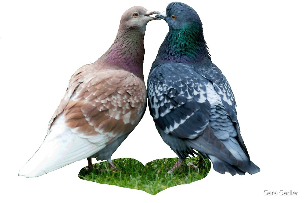 love story - or the tale of the kissing pigeons by Sara Sadler