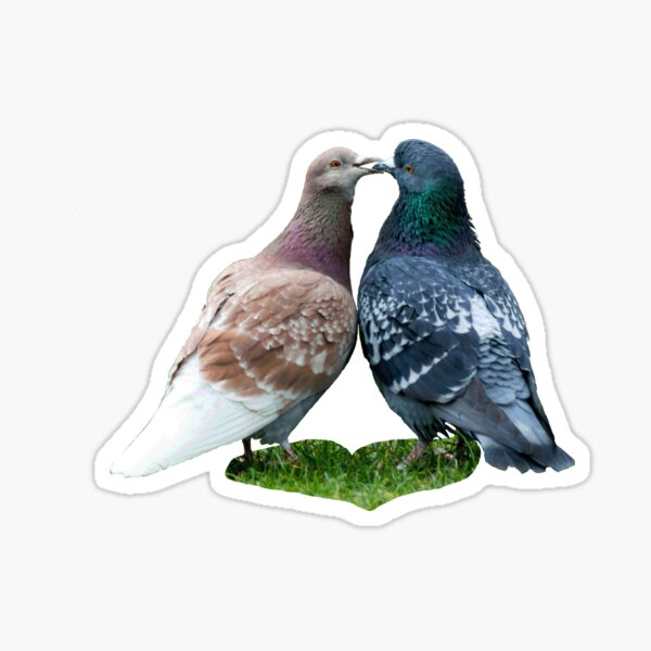 love story - or the tale of the kissing pigeons Sticker