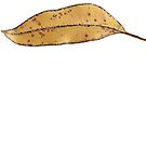 leaf brown tshirt by Bill  Russo
