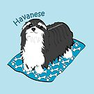 Havanese on a rug by Diana-Lee Saville