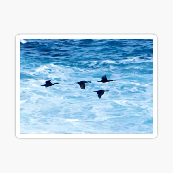Cormorants  Skimming the Waves off Inishmore Sticker