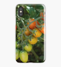 Date Tomatoes Ripening on Vine iPhone Case