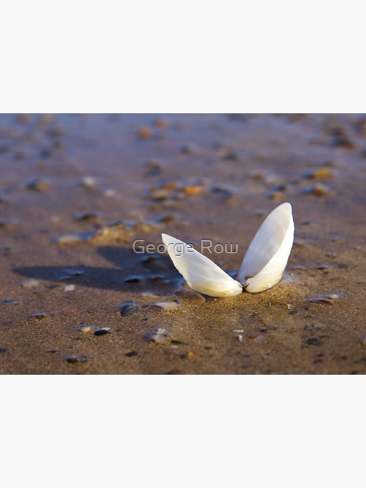 Cockle Shell  in Evening light at Fahan by VeryIreland