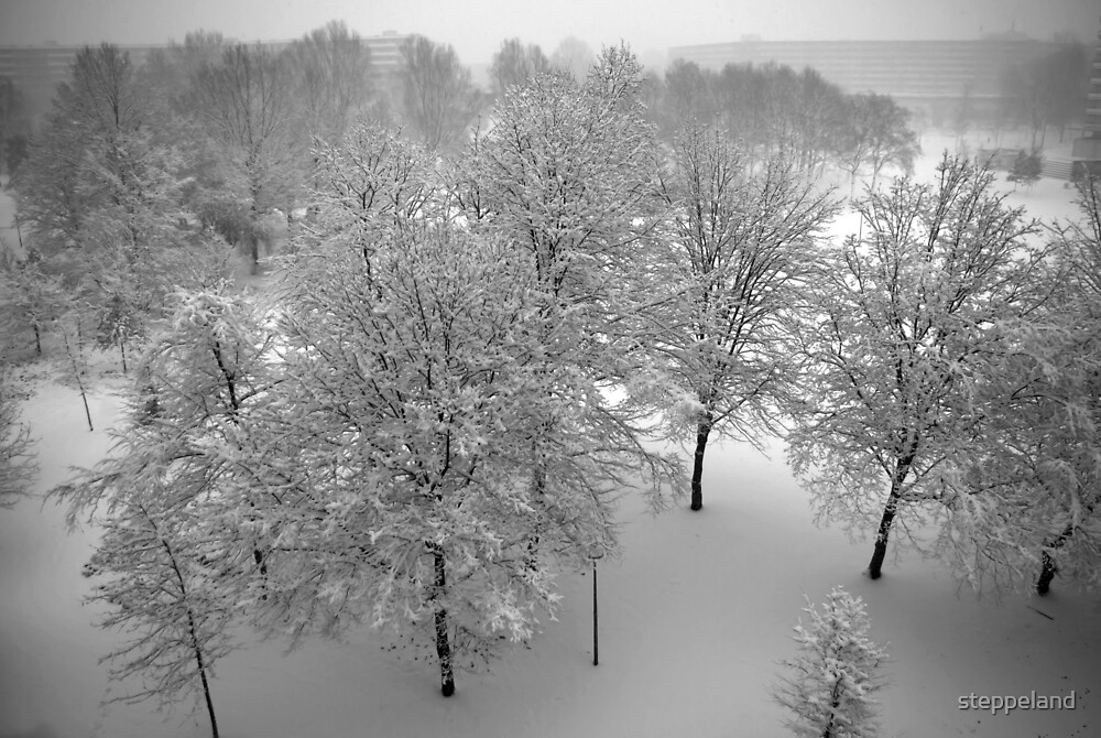 Looking down on snowy trees by steppeland