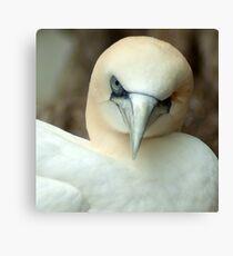 One Eyed Bird Wink  Canvas Print