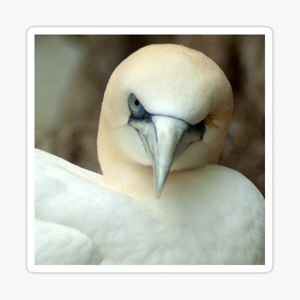 One Eyed Bird Wink  Sticker