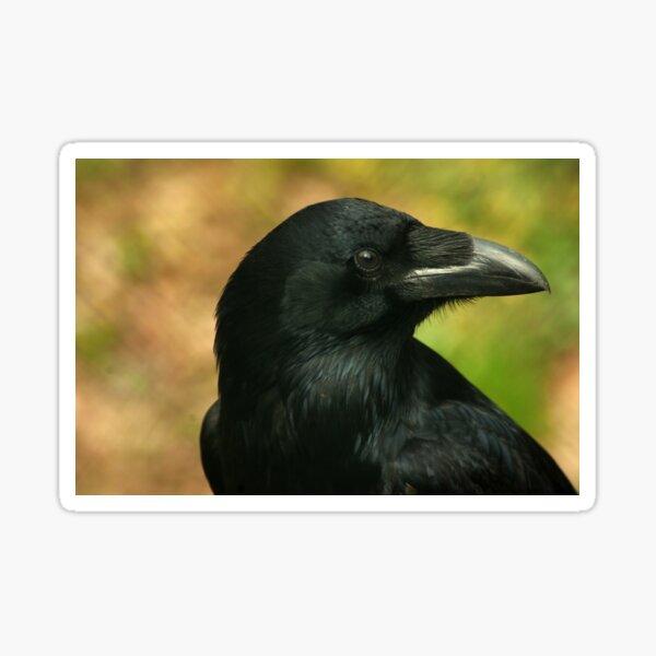 Raven, totem bird ... Sticker