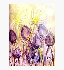 Dandelions In the Wind Photographic Print