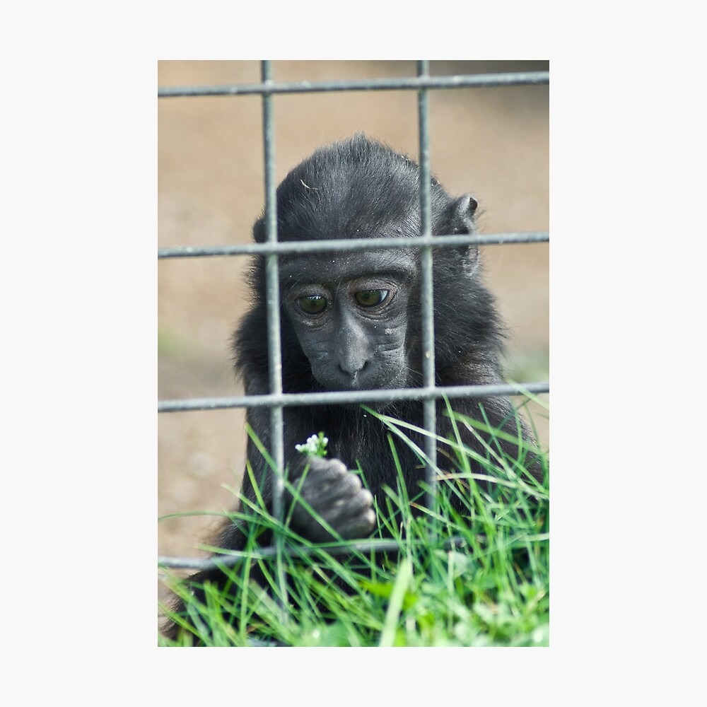 Caged thoughts... Photographic Print