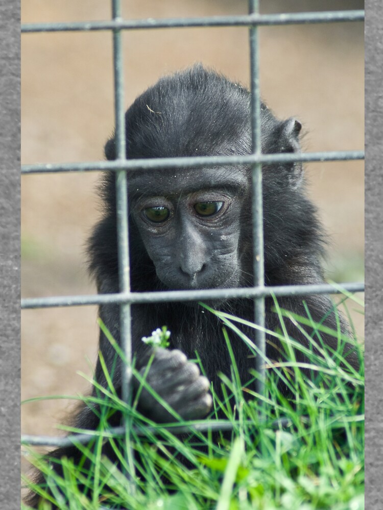 Caged thoughts... by daveriganelli
