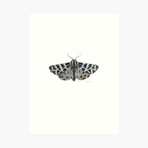 Kintsugi - A graphite drawing of a Tiger Moth by artist Brooke Figer Art Print