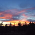 Color Photo of Firery Sunset Over Pine Trees by Marcie Alban