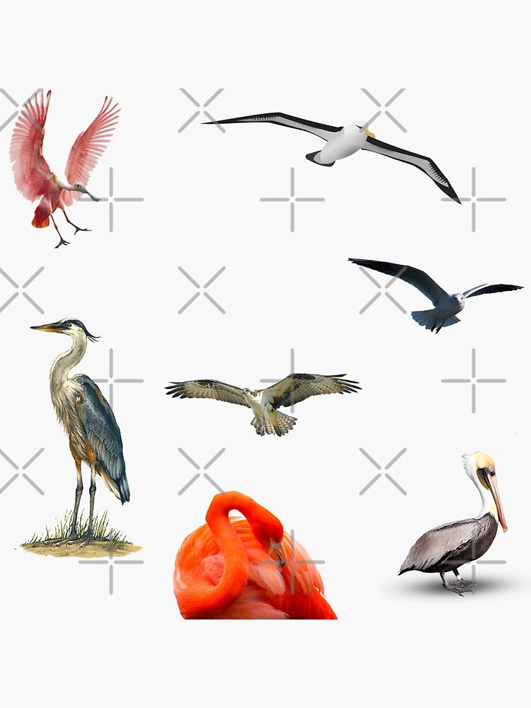 Florida Keys Birds  by KeysTreasures