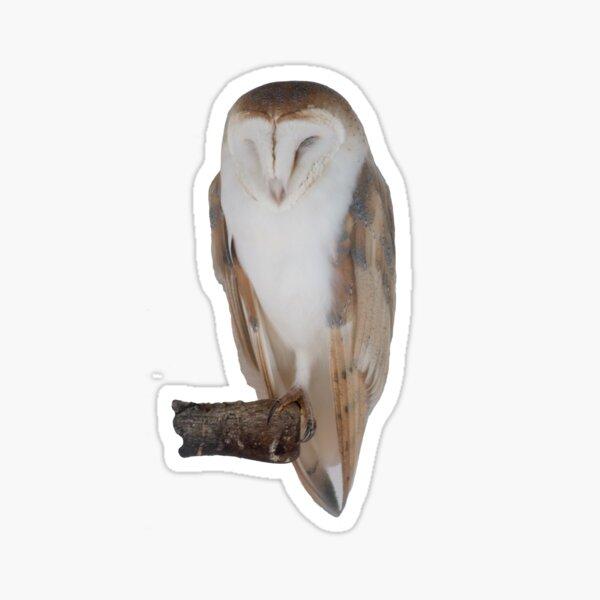 White owl at rest Sticker