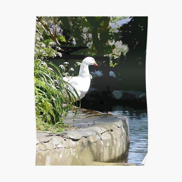 Peeking Duck Poster