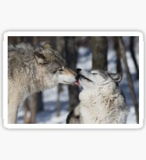 Timber Wolves in love Sticker