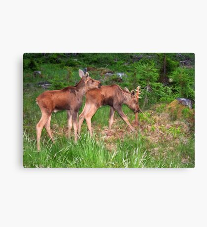 Twin Moose Babies Canvas Print