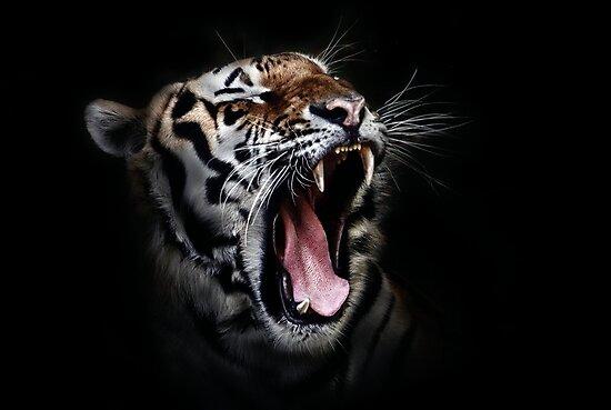Dangerous Tiger by Sven19864